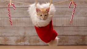 Cute ginger cat sitting in a santa hat hanging on drying line stock video footage