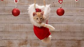 Cute ginger cat sitting in a santa hat, playing with christmas ball stock video footage