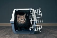 Cute ginger cat in a travel crate looks curious sideways. Cute ginger cat in a travel crate looks curious sideways in a empty room Royalty Free Stock Images