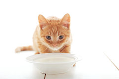 Cute ginger kitten Royalty Free Stock Photography