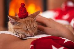 Cute ginger kitten enjoy company of its owner - sleeping on woma stock photos