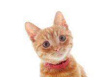 Cute ginger kitten stock image