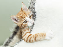 Cute ginger kitten in igloo Royalty Free Stock Images