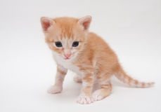 Cute ginger kitten isolated on white Royalty Free Stock Photo