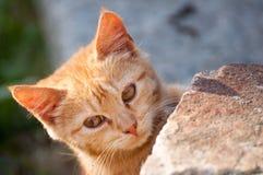 Cute Ginger Kitten. Portrait of Cute Ginger Kitten Outdoors stock photo