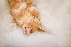 Cute, Ginger kitten is sleeping and smiling on a fur blanket. Concept cozy Hyugge and good morning. stock photos