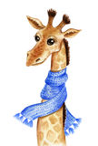 Cute giraffe in a blue scarf Royalty Free Stock Photos