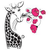 Cute giraffe with bunch of flowers Royalty Free Stock Photography
