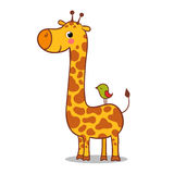 Cute giraffe calf standing. Stock Photography