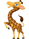 Cute giraffe cartoon Royalty Free Stock Image