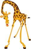 Cute giraffe cartoon Stock Images