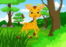 Cute giraffe cartoon. Cute giraffe in the jungle cartoon illustration vector illustration