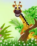 Cute giraffe cartoon smiling Stock Images