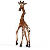 Cute giraffe with a funny face - lovely Royalty Free Stock Photo