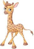 Cute Giraffe. Illustration of little cute giraffe calf Royalty Free Stock Image