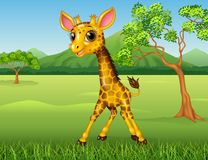 Cute giraffe in the jungle Stock Photo
