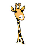 Cute giraffe with long eyelashes Stock Images
