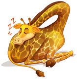 Cute giraffe sleeping alone Stock Images