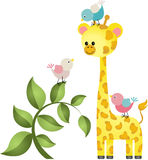Cute giraffe with three birds Stock Images