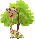 Cute Giraffe and tree. Giraffe and tree on grases Stock Photos