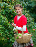 Cute girl in apple orchard Stock Photos