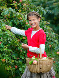 Cute girl in apple orchard Royalty Free Stock Image