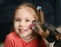 Cute girl being licked by a dog. Portrait of a beautiful smiling young girl being licked on the cheek by a cute terrier puppy dog Stock Image