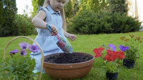 Cute girl dig hole in the pot with soil. Little girl work with flowers in the garden. Adorable child replant flowers from plastic pots into a big clay pot with a stock video footage