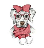 Cute Girl Dog in a winter scarf and red bow on its head.  Royalty Free Stock Images