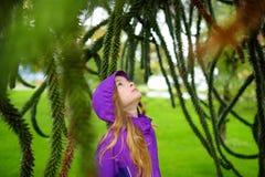 Cute girl examining spiky leaves of monkey puzzle tree on rainy autumn day. Cute little girl examining spiky foliage of evergreen monkey puzzle tree on rainy Royalty Free Stock Image