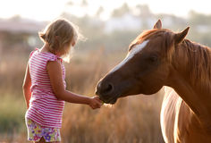 Cute girl feeding her handsome horse Stock Photography