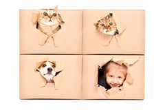 Cute girl and funny pets looks out of a torn hole in a box royalty free stock photos