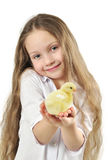 Cute girl holding little yellow chick Royalty Free Stock Image
