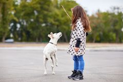 Beautiful young girl playing with dog outdoors. Pet concept. Cute girl kid with doggie playing on the street. Having fun together outdoors on the nature Stock Photos