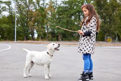 Beautiful young girl playing with dog outdoors. Pet concept. Cute girl kid with doggie playing on the street. Having fun together outdoors on the nature Royalty Free Stock Photos