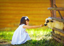 Cute girl, kid feeding lamb with grass, countryside Royalty Free Stock Photo