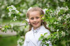 Cute girl listening to music in an apple blossom tree. adorable blonde enjoying music in headphones outdoors in a park. Children` royalty free stock images