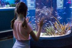 Cute girl looking at fish tank Royalty Free Stock Photos