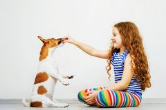 Cute girl  with play his dog jack russel terrier. A little girl is training the dog jack russel terrier Royalty Free Stock Image