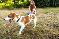 Cute girl is playing with her dog in the park. Young pet dog breeds beagle walking in park outdoors. woman carefully walks puppy, plays and trains, sits with pet royalty free stock images