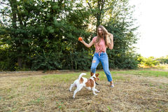 Cute girl is playing with her dog in the park. Young pet dog breeds beagle walking in park outdoors. woman carefully walks puppy, plays and trains, sits with pet stock photography