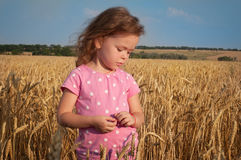 Cute girl playing in the wheat field Royalty Free Stock Photo