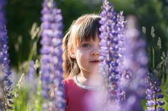 Cute little girl in the lupine flowers field royalty free stock photos