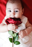 Cute girl with red rose. Cute little girl in white dress with red rose Royalty Free Stock Photography