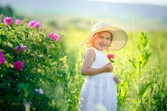 Cute girl wearing hat and white dress stand in the pink flower field of Sunn Hemp Crotalaria Juncea stock images