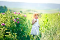 Cute girl wearing hat and white dress stand in the pink flower field of Sunn Hemp Crotalaria Juncea stock photo