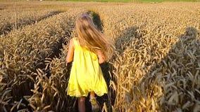 Cute girl in wheat field stock footage