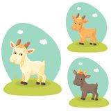 Cute Goat Stock Image