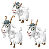 Cute goats with green eyes. Vector animals Stock Photo
