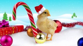 Cute gold young rooster with Christmas decoration and snowfall. Opens mouth, copy space